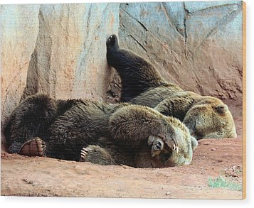 Wood Print featuring the photograph Lazy Bears by Sheila Brown