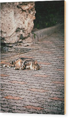 Wood Print featuring the photograph Lazy Cat    by Silvia Ganora