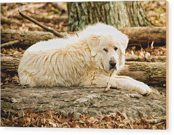 Lazy Dog Wood Print by Paul Bartoszek