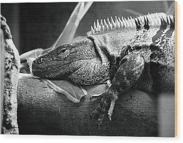 Lazy Lizard Wood Print