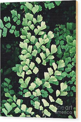 Leaf Abstract 15 Wood Print by Sarah Loft