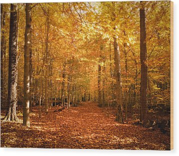 Leaf Covered Pathway In A Golden Forest Wood Print by Chantal PhotoPix