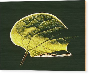 Leaf Detail Wood Print by Gerard Fritz