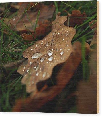 Leaf In Autumn. Wood Print by Bernard Jaubert