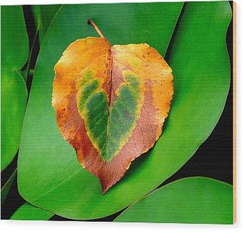 Leaf Leaf Heart Wood Print