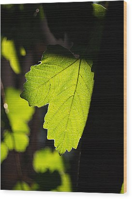 Leaf Light I Wood Print