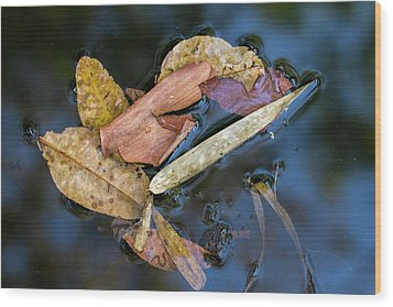 Wood Print featuring the photograph Leaf Litter In Pond, Navegaon, 2011 by Hitendra SINKAR