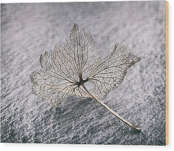 Leaf Skeleton Wood Print by Karen Stahlros