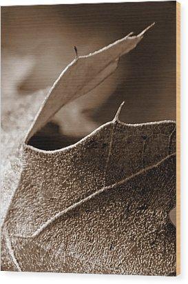 Leaf Study In Sepia II Wood Print by Lauren Radke