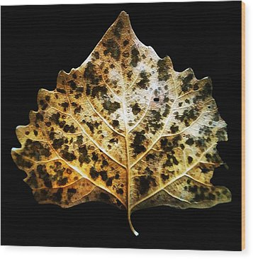 Leaf With Green Spots Wood Print