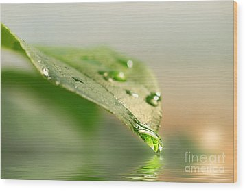 Leaf With Water Droplets Wood Print by Sandra Cunningham