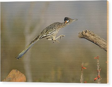 Leaping Roadrunner Wood Print by Scott  Linstead