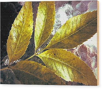 Leaves Of Gold Wood Print