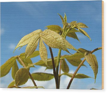 Wood Print featuring the photograph Leaves Of Gold by Peg Urban