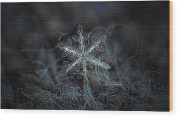 Leaves Of Ice, Panoramic Version Wood Print