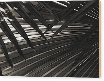 Leaves Of Palm Black And White Wood Print by Marilyn Hunt