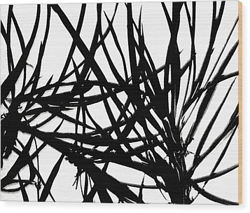 Wood Print featuring the digital art Lee Krasner Spider Plant Detail 1 by Dick Sauer