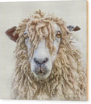 Leicester Longwool Sheep Wood Print by Linsey Williams