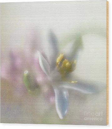 Wood Print featuring the photograph Lemon Blossom by Elena Nosyreva