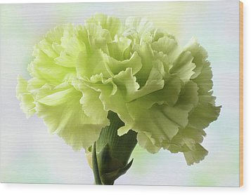 Wood Print featuring the photograph Lemon Carnation by Terence Davis