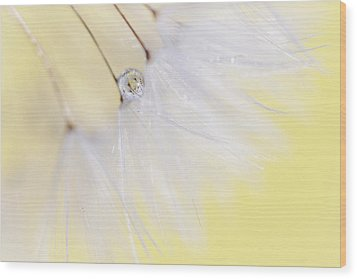Wood Print featuring the photograph Lemon Drop by Amy Tyler