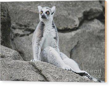 Lemur The Cutie Wood Print