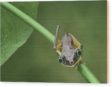 Wood Print featuring the photograph Lemur Tree Frog - 1 by Nikolyn McDonald