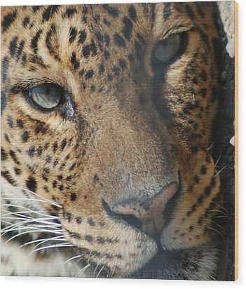 Wood Print featuring the photograph Leopard Face by Richard Bryce and Family