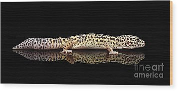 Leopard Gecko Eublepharis Macularius Isolated On Black Background Wood Print