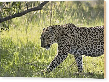 Leopard In The Grass Wood Print by Marion McCristall