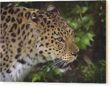 Wood Print featuring the photograph Leopard by Steve Stuller