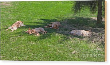 Let Sleeping Dogs Lie Wood Print by Louise Heusinkveld