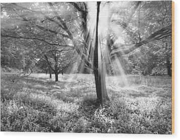 Let There Be Light Wood Print by Debra and Dave Vanderlaan