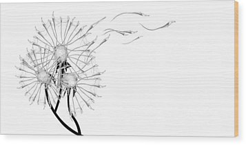 Letting Go Being Free Wood Print by Aiden Galvin