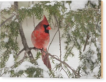 Wood Print featuring the photograph Leucistic Northern Cardinal by Everet Regal