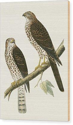 Levant Sparrow Hawk Wood Print by English School
