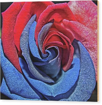 Wood Print featuring the photograph Liberty Rose by Judy Vincent