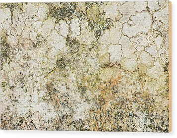 Wood Print featuring the photograph Lichen On A Stone, Background by Torbjorn Swenelius
