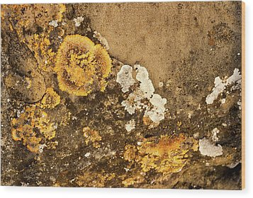 Wood Print featuring the photograph Lichen On The Piran Walls by Stuart Litoff