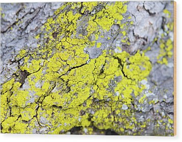 Wood Print featuring the photograph Lichen Pattern by Christina Rollo