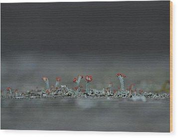 Lichen-scape Wood Print
