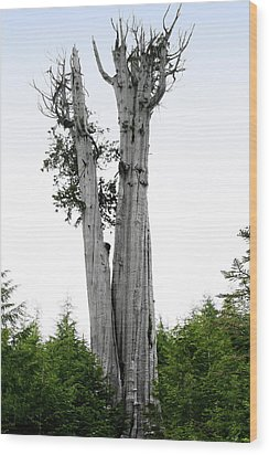 Life At The Top - Duncan Cedar Olympic National Park Wa Wood Print by Christine Till