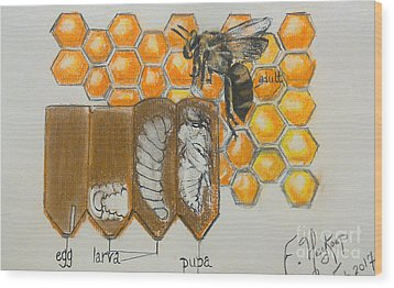 Life Cycle Of A Bee  Wood Print