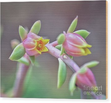 Wood Print featuring the photograph Life Delights In Life by Kerri Farley