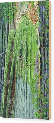 Life In A Redwood Forest Wood Print