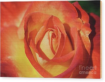 Life Is Like A Rose Peeping Through The Hardships Of Life To Bloom With Color Wood Print by Fir Mamat
