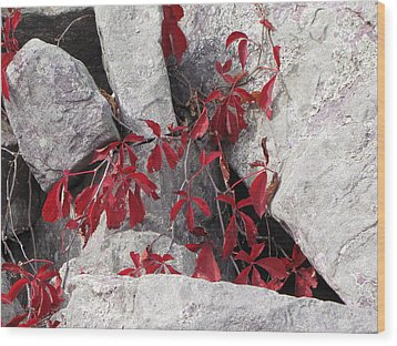 Life On The Rocks Wood Print by Sylvia Wanty