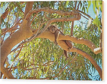 Wood Print featuring the photograph Life's Hard, Yanchep National Park by Dave Catley