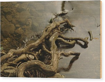 Life's Twist Wood Print