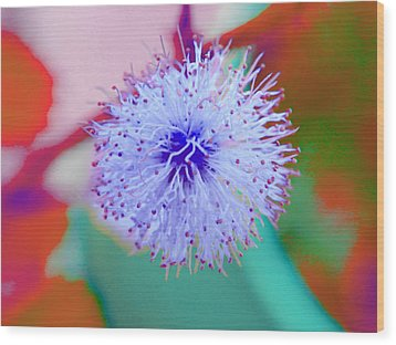 Light Blue Puff Explosion Wood Print